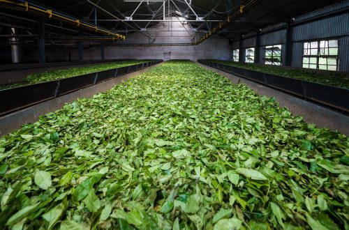 DCO sensors help monitor the tea production process as shown in case studies